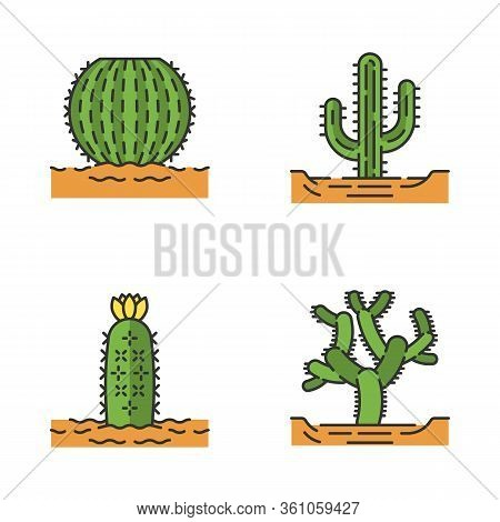 Wild Cacti In Land Color Icons Set. Tropical Succulent. Spiny Plant. Barrel Cactus, Cholla, Saguaro,