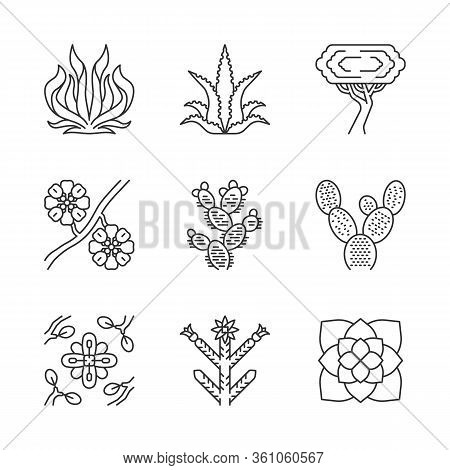 Desert Plants Linear Icons Set. Exotic Flora. American Succulents. Larrea, Palo Verde Tree, Aloe Ver