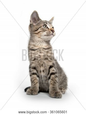Cute Baby Tabby Kitten Swinging Its Paw And Looking Up Isolated On White Background