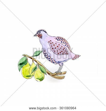 Watercolor Illustration, Partridge In Pear Tree For 12 Days Of Christmas Charms