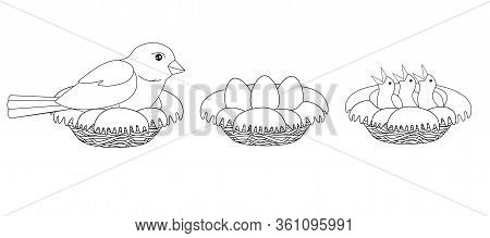 The Process Of Hatching Chicks - A Bird Sits On A Nest, A Nest With Eggs And A Nest With Chicks - Ve