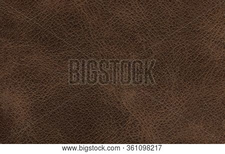 Genuine Cowhide Texture Close Up, Useful As Background For Any Design Work