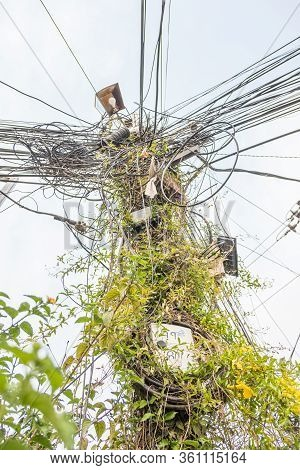 Kathmandu, Nepal - April 14, 2020: Vines Climb A Utility Pole In The City. During The Coronavirus Lo