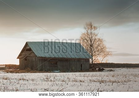 An Old Barn And A Bare Birch Tree Stand On The Snowy Spring Fields Of The Rural Finland.