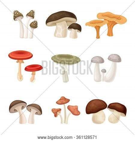 Different Forest Mushrooms Or Toadstools With Stem And Cap Isolated On White Background Vector Set