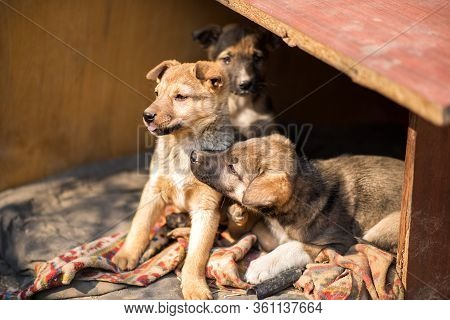 Little Homeless Puppys In Handmade Aviary Made By Volunteers Waiting For Family To Adopt Dog. Small