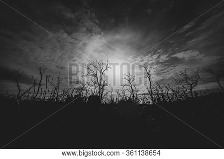 Black And White Image Of Dead Gum Trees Silhouetted And Back-lit By Sun Filtered By Light Cloud In F