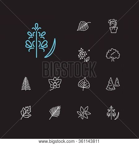 Plants Icons Set. Flower And Plants Icons With Poplar Leaf, Palm Leaf And Orchids. Set Of Fresh For