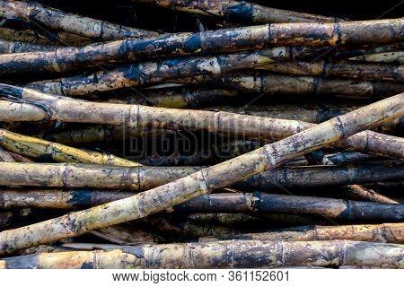 Pile Sugarcane Burned In The Harvest Season, Sugar Cane Fresh, Sugarcane Burn In Field, Sugar Cane B