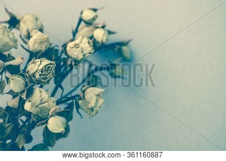Dry Faded Flowers, Composition With A Bouquet Of Beautiful Dried Roses. A Concept Of Memories, Nosta