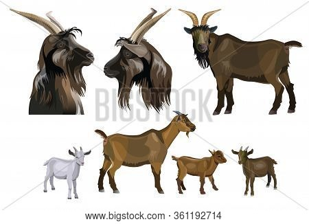 Goat Images Collection. Set Of Vector Illustration