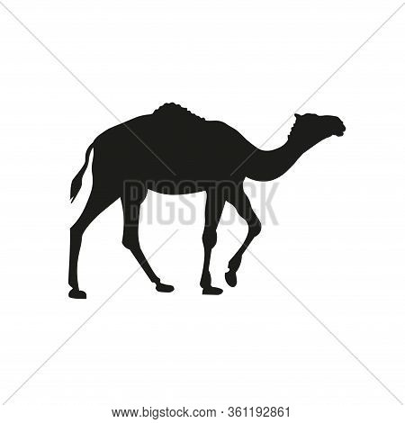 Black Silhouette Of Dromedary On White Background