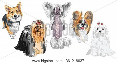 Set Of Dogs. Maltese, Hairless Chinese Crested Dog, Pembroke Welsh Corgi, Yorkshire Terrier With Exh