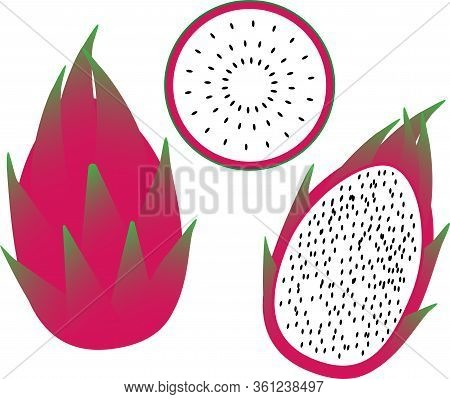 Dragon Fruit Pitahaya Vector Image Of The Whole Fruit And Slices Of Bright Fresh