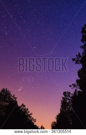 Stellar Sky Nature Background. Night Sky Covered With Stars. Tree Silhouettes And Night Sky Nature.