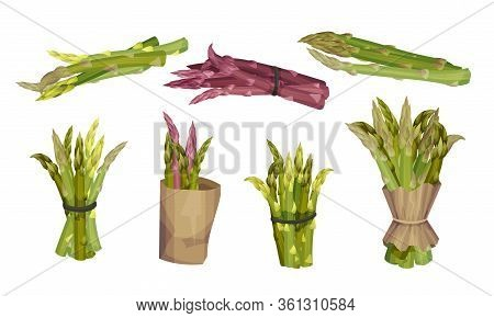 Fresh Green Asparagus Spears Tied With Rope And Wrapped In Craft Paper Vector Set