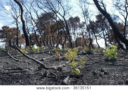 New Life After Forest Fire