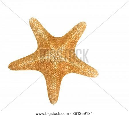 Orange Seastar Isolated On A White Background