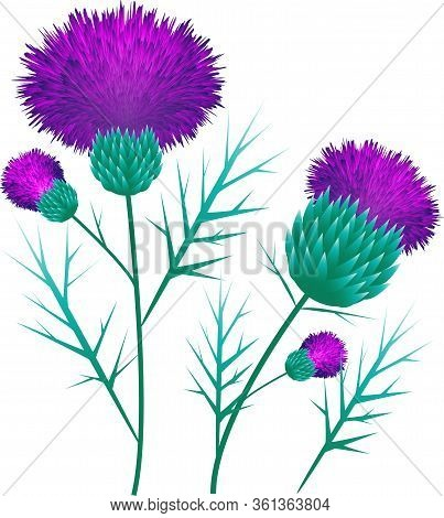 Thistle Collage Vector Illustration Pink Purple Flowers Leaves Plants