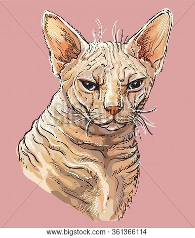 Vector Colorful Hand Drawing Portrait Of Angry Sphinx Cat Isolated On Pink Background. Colorful Real