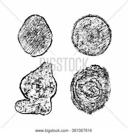Cross Section Of Tree Stumps Isolated On White. Vector Illustration Of Cut Wood Texture