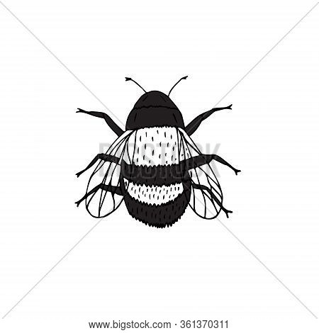 Vector Hand Drawn Doodle Sketch Bumblebee Bee Isolated On White Background