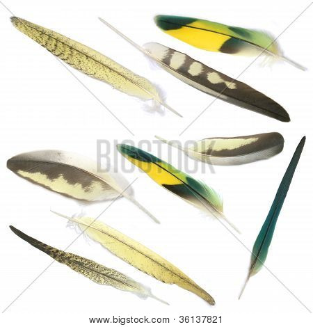 Collection Of Bird's Feathers