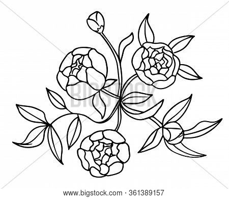 Vector Peony Flower Bouquet Isolated On White Background. Element For Design. Hand-drawn Contour Lin