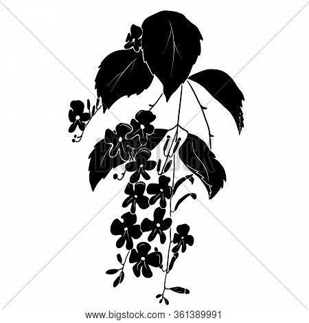 Black Silhouette Of Small Flowers With Leaves Isolated On White Background.
