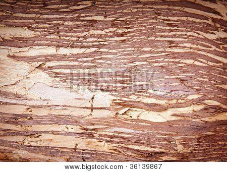 Paper Bark Background