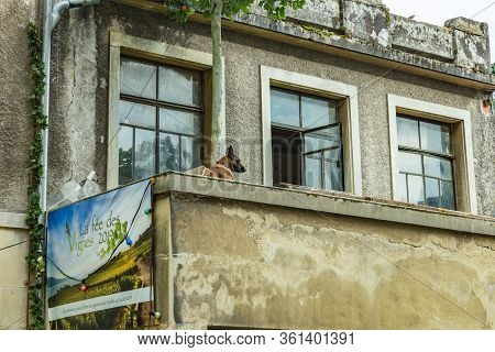 Vevey, Switzerland - July 27 2019: Old Dog On The Old Balcony Celebrates Fete Des Vignerons 2019. Tr