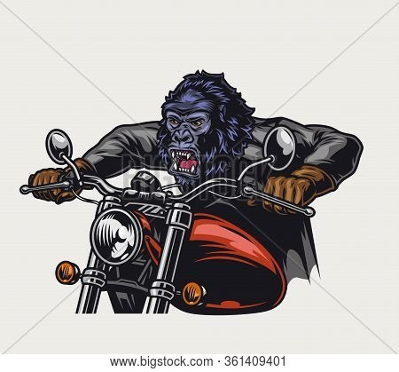 Colorful Ferocious Gorilla Head Moto Rider Driving Motorcycle In Vintage Style Isolated Vector Illus