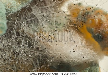 Macro Photography Close-up Of Penicillin, Green Mold, White Fluff Of Tender Mold. Mold In The Sun. A
