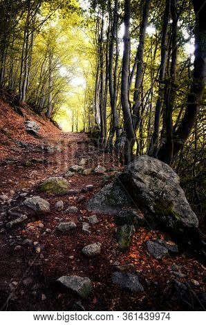 Pathway Into An Intricate Wood With Autumn Fallen Leaves On The Ground And Stones