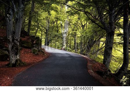 Road Into An Intricate Wood With Fallen Leaves