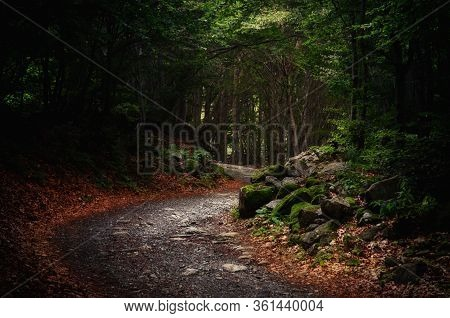 Pathway Into An Intricate Wood With Fallen Leaves On The Ground And Stones