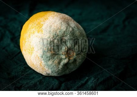 Texture Of Blue Mold On The Yellow Lemon. Spoiled Rotting Lemon With Mold On A Green Rustic Backgrou
