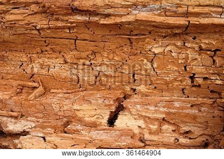 Old Rotten Wood. Old Weathered Mouldering Tree. Weathered Tree Destruction. Background Or Texture. D