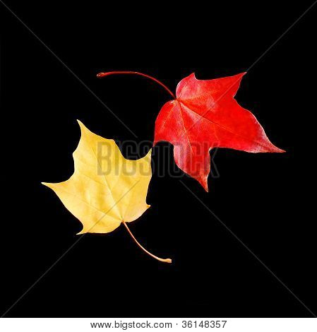 Dancing autumn leaves