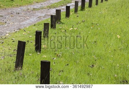 Creosote Poles In Grassy Area Marking Edge Of Driveway