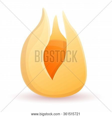 Physalis Icon. Cartoon Of Physalis Vector Icon For Web Design Isolated On White Background