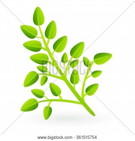 Superfood Plant Icon. Cartoon Of Superfood Plant Vector Icon For Web Design Isolated On White Backgr