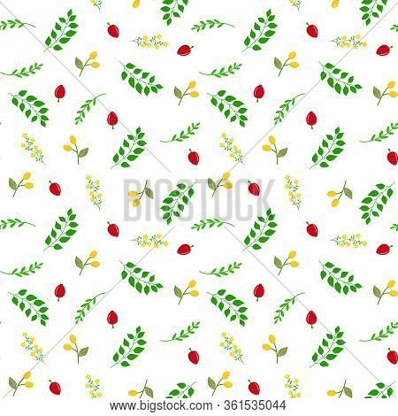 Seamless Botanical Vector Pattern With Hand Drawn Doodle Berries Red Rose Hips Yellow Buckthorn Gree