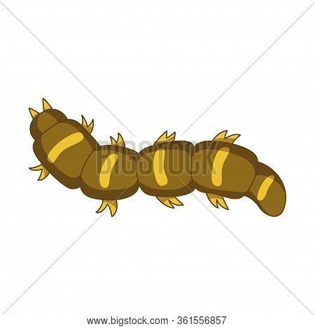 Caterpillar Insect, Entomology Wildlife And Natural Design