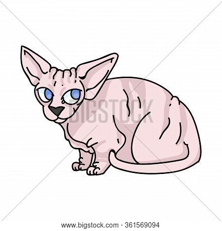 Cute Cartoon Sphynx Kitten Vector Clipart. Pedigree Exotic Kitty Breed For Cat Lovers. Purebred Dome