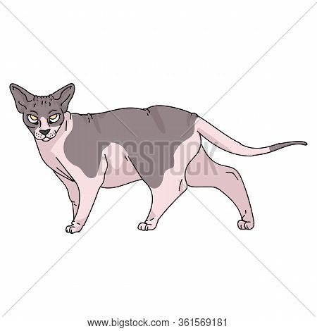 Cute Cartoon Sphynx Cat Vector Clipart. Pedigree Exotic Kitty Breed For Cat Lovers. Purebred Domesti