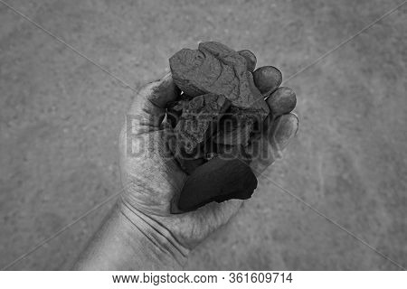 Coal Mining - Man Hand Holding Natural Black Charcoal For Background. Picture Idea About Coal Mining
