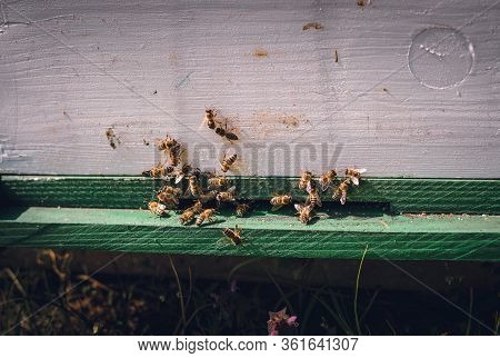 Nature Background Of Bee Apiary. Bee Insect In Nature. Nature Insect Bees In Apiary In Meadow. Bee I