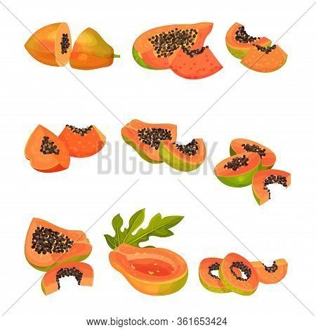 Whole Papaya Fruit And Cross Section Showing Orange Flesh And Numerous Black Seeds Vector Set