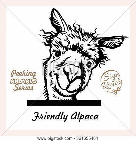 Peeking Funny Alpaca - Surprised Alpaca Peeking Out - Face Head Isolated On White - Vector Stock